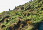 Bowenvale-trail-2