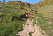Bowenvale-trail-3